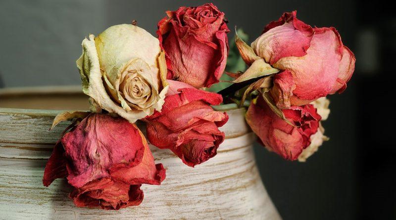 Chyby podle feng-šuej aneb proč nemít sušené květiny v domě