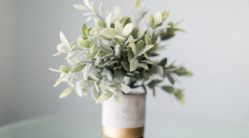 Čtyři pokojové rostliny pro pročištění vzduchu v domácnosti