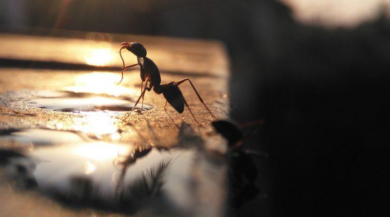 Objevili se ve vašem domě mravenci? Zbavte se jich jednoduše