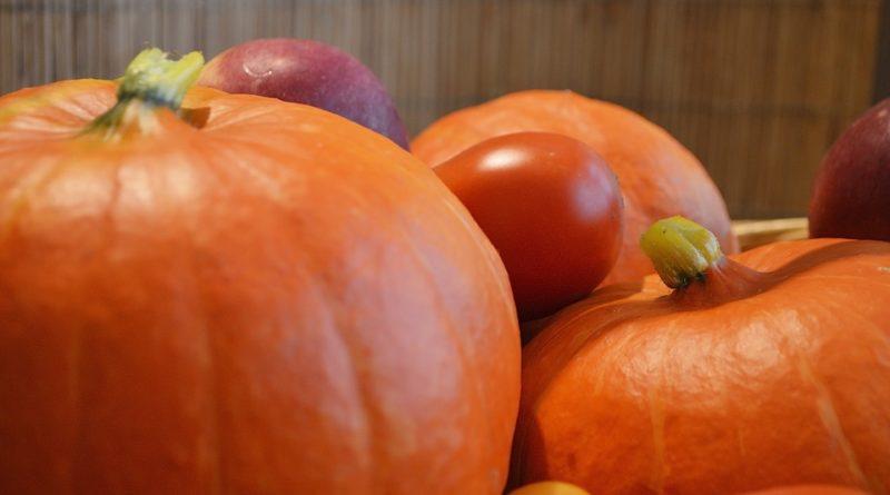 Nejčastější choroby napadající zahrádkářovu úrodu