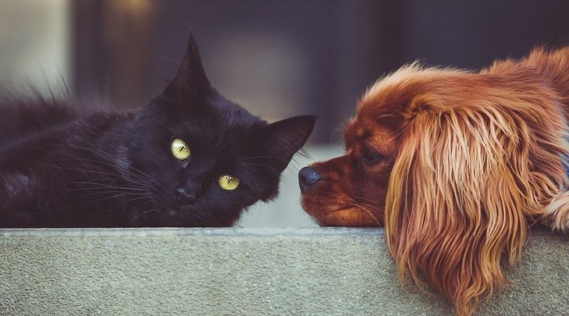 Máte doma kočku a chcete i psa? Některá plemena se s kočkou snáší