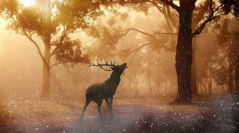 Sedm překvapivých faktů o zvířatech, o nichž jste neměli ani tušení