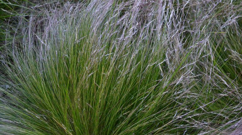 Sucho zahradě neprospívá, některé rostliny ho ale ocení